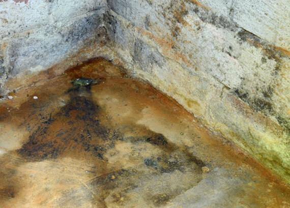 Mold grows out of control in an Ottawa basement after flooding